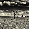 Forgotten Tree by Joshua House
