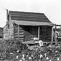 Former Slaves At Their Cabin by Underwood Archives