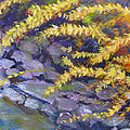 Forsythia Creek by Susan Duda