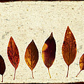 Forsythia Leaves In Fall by Carol Leigh