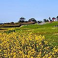 Fort Casey Spring by Rick Lawler