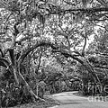 Fort Clinch Live Oaks by Dawna Moore Photography
