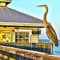 Fort Myers Beach Bird On Pier by Timothy Lowry