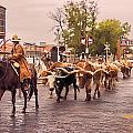 Fort Worth Cattle Drive by Ray Summers Photography