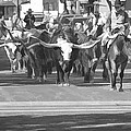 Fort Worth Herd Cattle Drive by Jonathan Davison