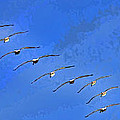 Forteen In Flight by Blake Richards
