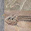 Fossil Fishing by Stephen Warren