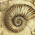 Fossil Shell by JQ Licensing
