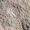 Fossiliferous Limestone by Dirk Wiersma