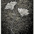 Fossilized Flowers by Dan Sproul