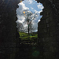 Fountains Abbey by Richard Gibb