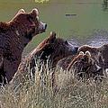 Four Bears by Michele Avanti