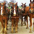 Four Horse Power by B Wayne Mullins