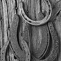 Four Horseshoes by Garry Gay