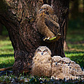 Four Owl Chicks In A Dark Forest by Nick  Biemans