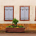Four Pale Blue Shutters In Alsace France by Greg Matchick