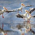 Four Pelican Landing Watercolor Effect by Martin Belan