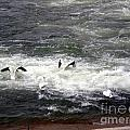 Four Pelicans By The Weir by Eejee Art