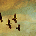 Four Ravens Flying by Peggy Collins