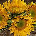 Four Sunflowers by Phyllis Denton