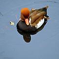 Fowl Ginger by Gary Mosman