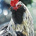 Fowl Martyr by Cara Bevan