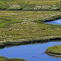 Fox Creek Marsh by David Stone