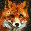 Fox by Panolamani  Holdings