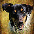 Fox Terrier Dog by Ronel Broderick