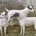 Fox Terriers by Charlie Ross