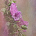 Foxglove by Angie Vogel