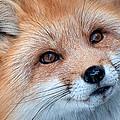 Foxy Lady by Bianca Nadeau