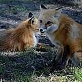 Foxy by Linda Kerkau