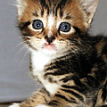 Foxy The Kittens Big Eyes by Terri Waters