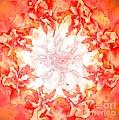 Fractal Carnation by Elizabeth McTaggart