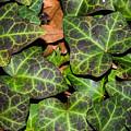 Fractal Ivy by Frankie Grant