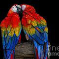 Fractal Parrots by Teresa Zieba