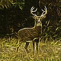 Fractalius 8 Point Buck by Jim Lepard