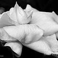 Fragrant Petals by Michelle Constantine