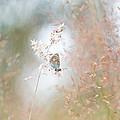 Frame Of Grasses by Teuni Stevense