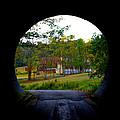 Framed By A Tunnel by Cathy Shiflett