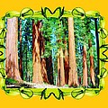 Framed Sequoias by Bruce Nutting