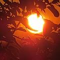 Framed Sun by Nikki Watson    McInnes