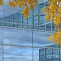 Framing The Sky by Ann Horn