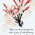 Frangipangi Pulmeria  Poem by Karin  Dawn Kelshall- Best