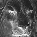 Frankie Lion Negative by Rob Hans