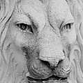 Frankie Lion by Rob Hans