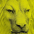 Frankie Lion Yellow by Rob Hans