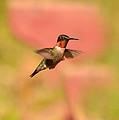 Free As A Bird by Lori Tambakis