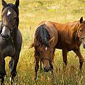 Free Happy Horse Joy On Samsoe Island Denmark  by Colette V Hera  Guggenheim